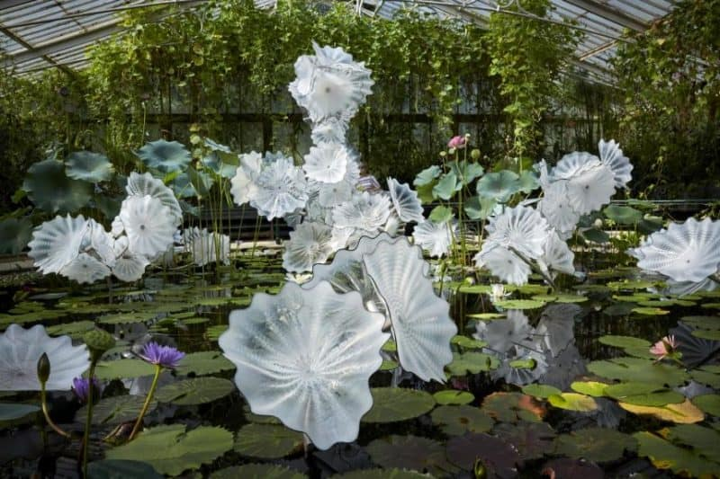 Dale Chihuly: Glass in Bloom to premiere at Gardens by the Bay