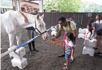 Friends of Horses Fair @ Singapore Polo Club | Singapore | Singapore