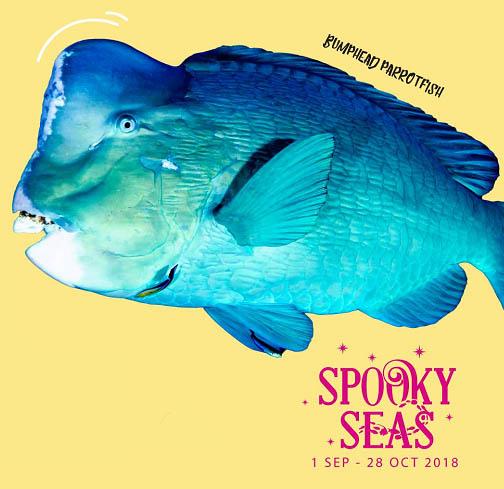 Spooky Seas: Meet the Quirky @ S.E.A. Aquarium, Resorts World Sentosa | Singapore